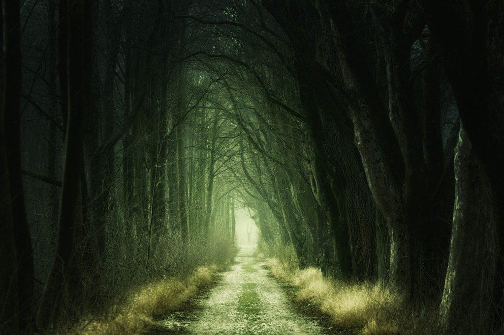 Dark Fantasy Wald gruselig Atmosphöre